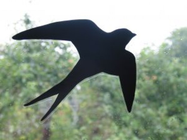 swallow-silhouette_2766350
