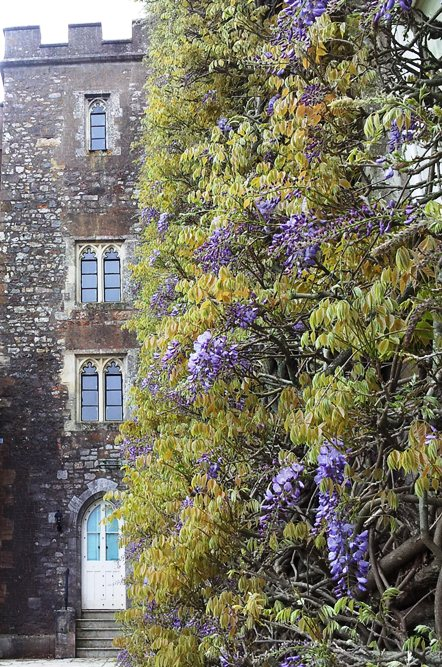Wisteria coming out May 2013